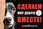 Помощь животным,  питомцам...